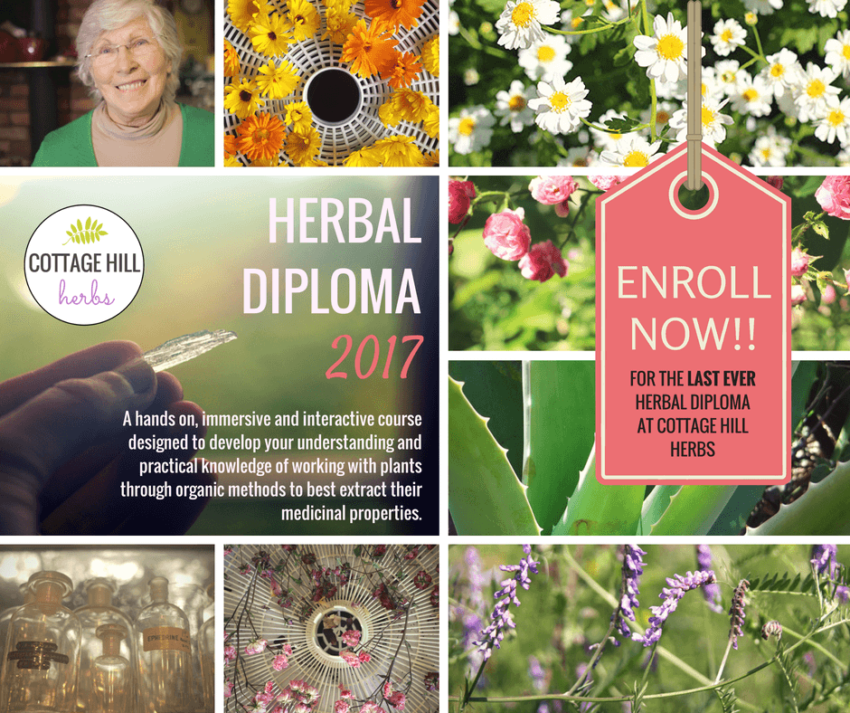 herbal-diplima-for-slider-enroll-now