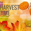 Autumn = harvest time!
