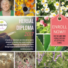 2 Spots Opened up for Herbal Diploma!!