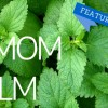 Featured Herb - Melissa Lemon Balm!