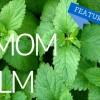 Featured Herb - Melissa Lemon Balm!