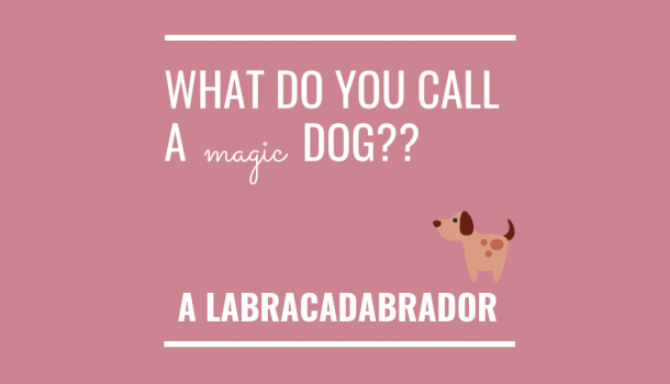 This post is not about magic dogs.