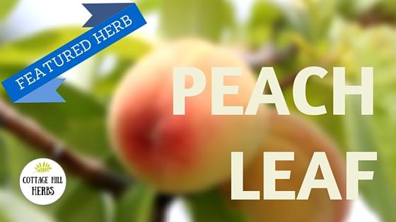 Featured Herb - Peach Leaf