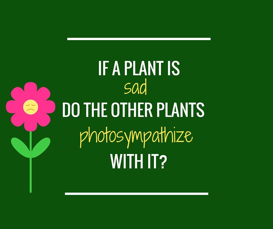 Ifa plant is sad