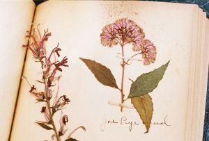 honeykennedy-marcine-herbarium-03